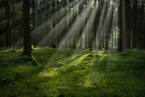 Free Stock Photography of Trees